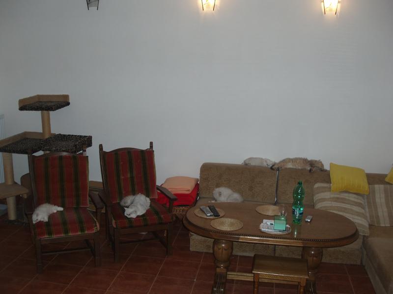 EUCKER / CFA/ chinchilla, silver, golden, persian, exotic cat ...